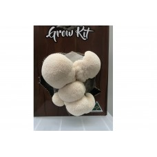 Mushroom Kit - Australian Hericium / Lions mane - Great for making Teas or Extracts - Free Shipping