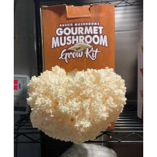 Mushroom Kit - Australian Native CoralTooth Hericium coralloides, amazing flavor - Free Shipping