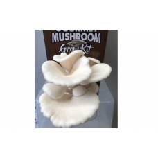 AUSTRALIA DAY SALE!!! Mushroom Kit - White Oyster (Pleurotus Ostreatus) - FREE Shipping
