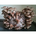 Mushroom Growing Kits - The Power of Mushrooms